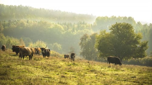 Grubenfelder Leonie