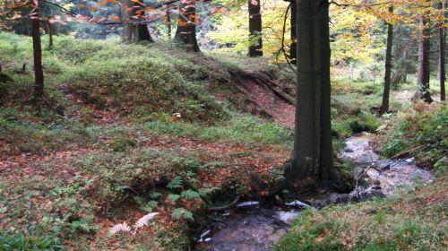 Naturpark Erzgebirge/ Vogtland