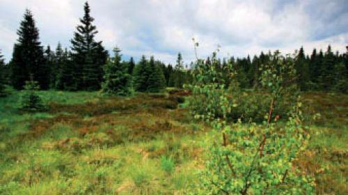 NNR Gottesgaber Hochmoor (Božídarské rašeliniště)