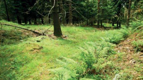 NND Kiefernwald Pflugsche Heide (Pluhův bor)