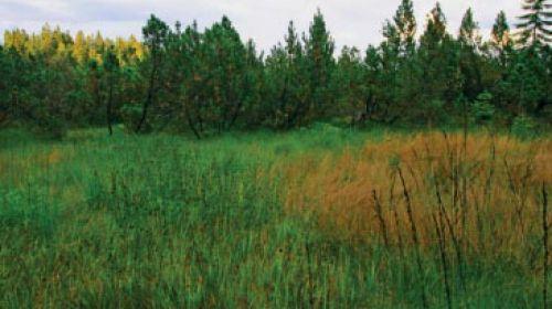 NNR Grosses Moor (Velký močál)