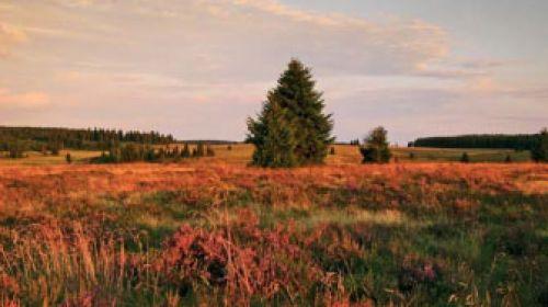 NP Frühbusser Heide (Přebuzské vřesoviště