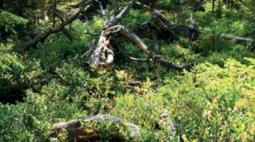 ND Torfmoor Haar (Rašeliniště Haar)