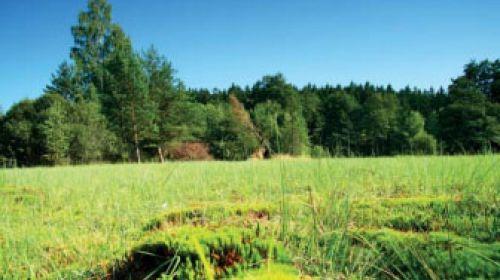NR Hämmerhäuselner Feuchtgebiet (Hamrnický mokřad)