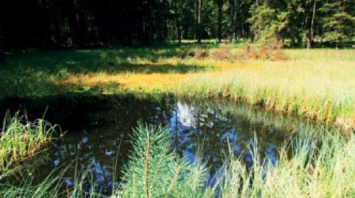 NR Tümpel bei Rosshaupt (Jezírka u Rozvadova)