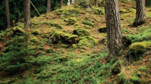NR Einsiedler Heide (Planý vrch)