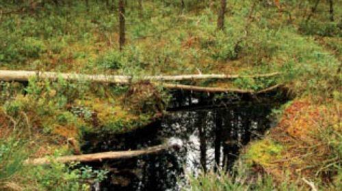 NR Podkovák